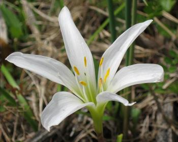 Lily--photo by Julie McCarty--Eagan MN USA