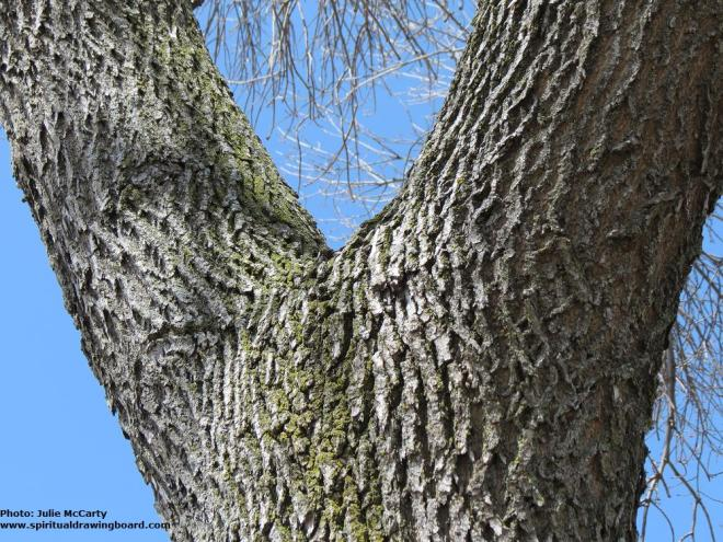 Branching out--photo by Julie McCarty