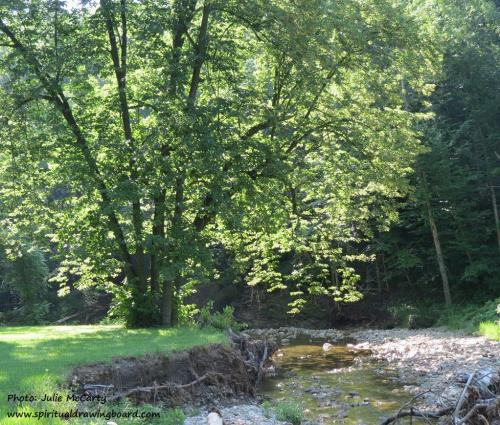 Tree beside stream--photo by Julie McCarty