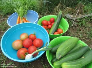 Veggies from garden--Julie McCarty