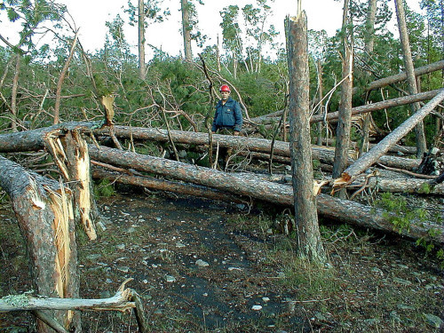 U.S. FOREST SERVICE PHOTO -- BWCAW blowdown on July 4, 1999.